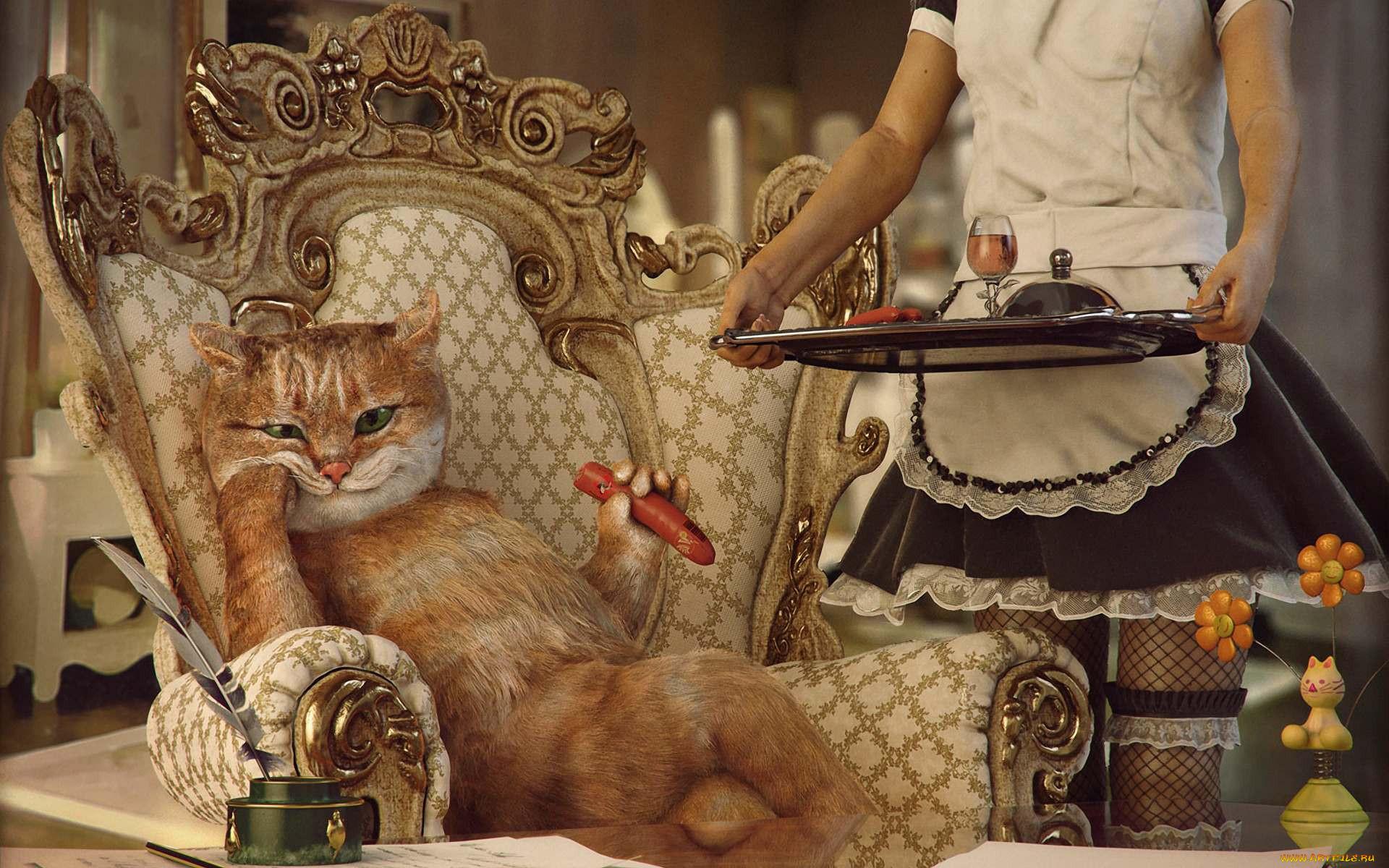 юмор и приколы, кот, кресло, горничная